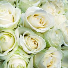 101 біла троянда 60 см фото