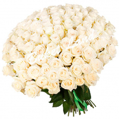 101 белая роза 70 см фото
