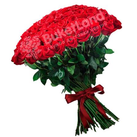 101 красная голландская роза Freedom фото