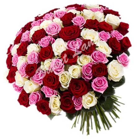 101 роза микс «розово-красно-белая» 60 см фото