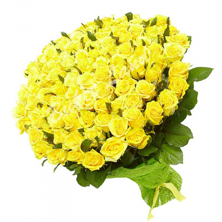 101 желтая роза Пени Лейн 60 см