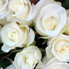 11 white roses 50 cm photo