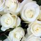 11 белых роз 50 см фото