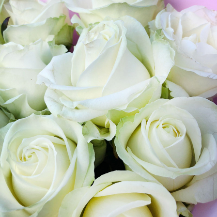 11 white roses 60 cm photo
