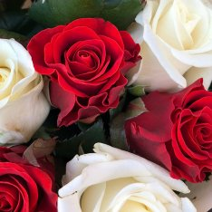 11 mix roses red-white 50 cm photo