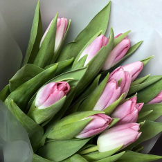 11 рожевих тюльпанів фото