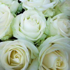 15 білих троянд 60 см фото