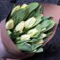 15 белых тюльпанов фото