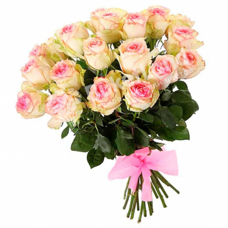 15 Ecuadorian roses 60 cm in stock photo