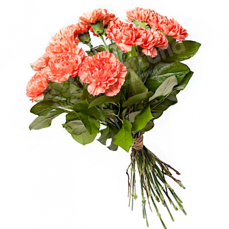 15 carnations in assortment photo