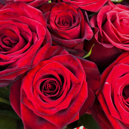 15 red roses 60 cm photo