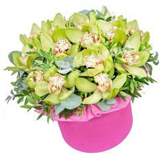 15 орхідей в шляпной коробці фото