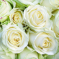 151 біла троянда 60 см фото
