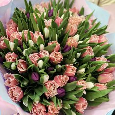 151 tulips in stock photo