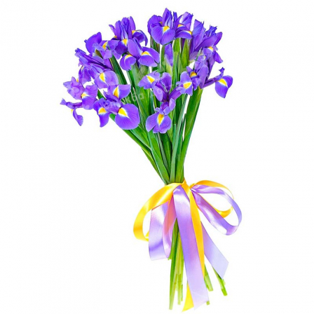 17 blue-purple irises photo