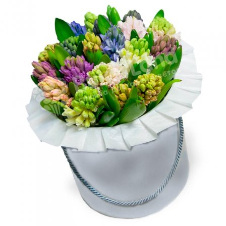 19 hyacinth mix in a hat box photo