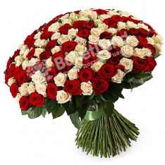 201 троянда мікс червоно-біла 60 см фото