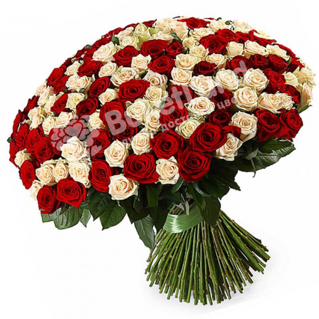 201 роза микс красно-белая 60 см фото