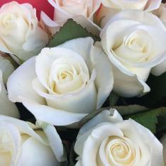21 біла троянда 50 см фото