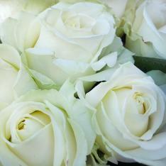 21 біла троянда 60 см фото