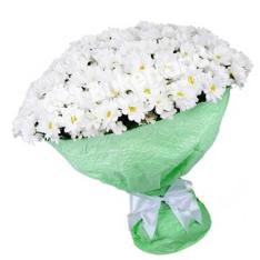 25 білих хризантем фото