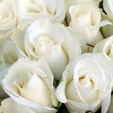 25 white roses 50 cm photo