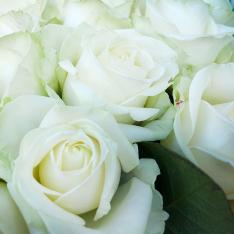 25 white rose 60 cm photo