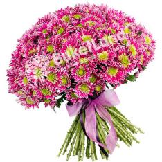 25 розовых хризантем фото