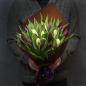 25 тюльпанов микс (2 цвета) фото