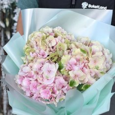 3 hydrangeas in assortment photo