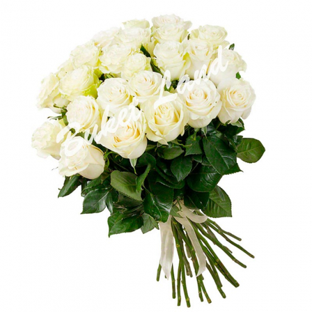 31 белая роза Аваланч 60 см фото
