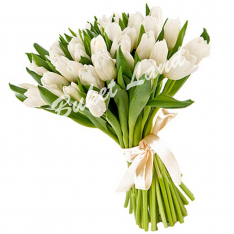 31 белый тюльпан фото