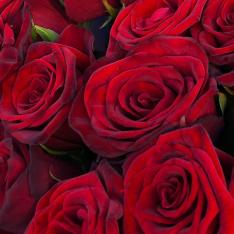 31 червона троянда 60 см фото