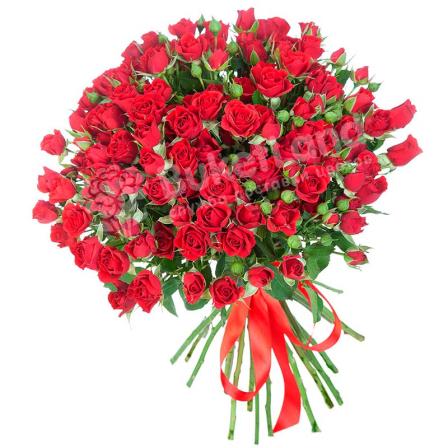 31 красная роза спрей фото