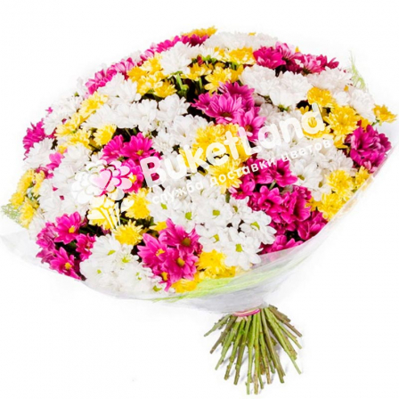 35 chrysanthemum mix photo