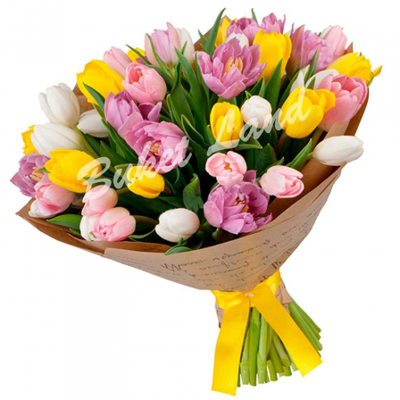 39 тюльпанов микс «бело-желто-розово-фиолетовый»