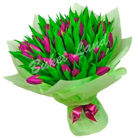 41 фиолетовый тюльпан фото