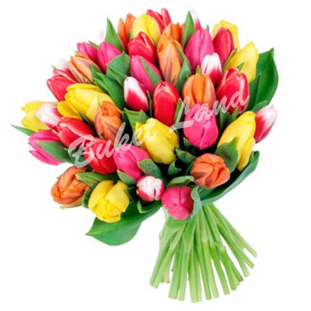 41 разноцветный тюльпан