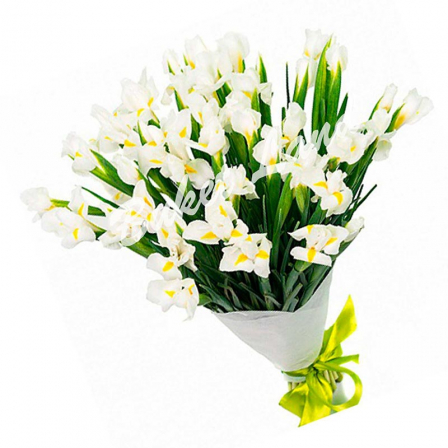 49 white irises photo