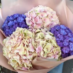 5 hydrangeas in assortment photo