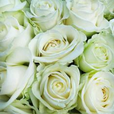 51 біла троянда 60 см фото