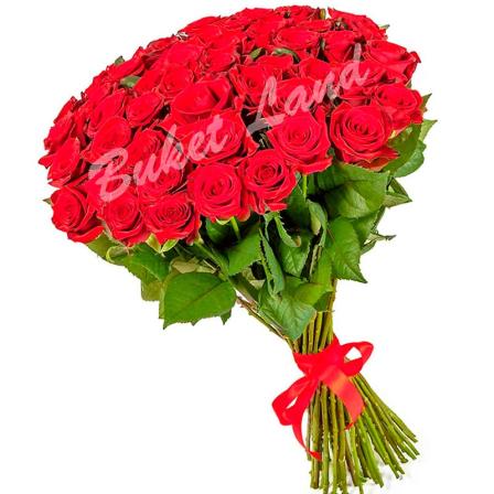 51 red rose 80 cm photo