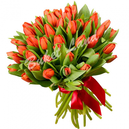51 красный тюльпан фото