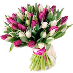 51 тюльпан микс «бело-фиолетовый» фото