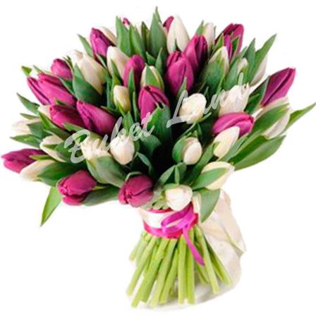 51 тюльпан микс «бело-фиолетовый»