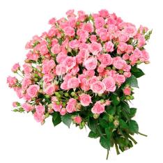 51 веточка розовой розы спрей 60 см фото