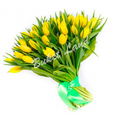 51 жёлтый тюльпан фото