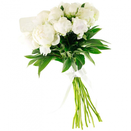 9 white peonies photo