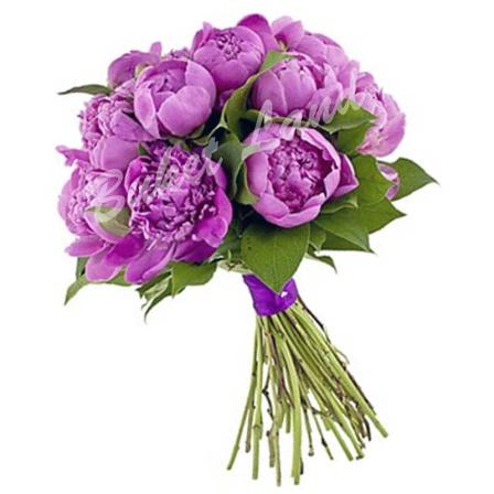 9 фиолетовых пионов
