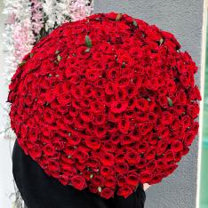 301 червона троянда 70 см фото